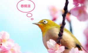 春色満開!入園無料の久屋大通庭園『フラリエ』